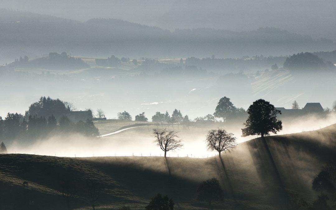 Tierras gratuitas en Galicia para quien quiera cultivarlas